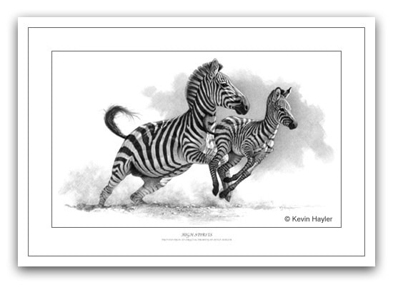 Zebras running mother and foal pencil drawing