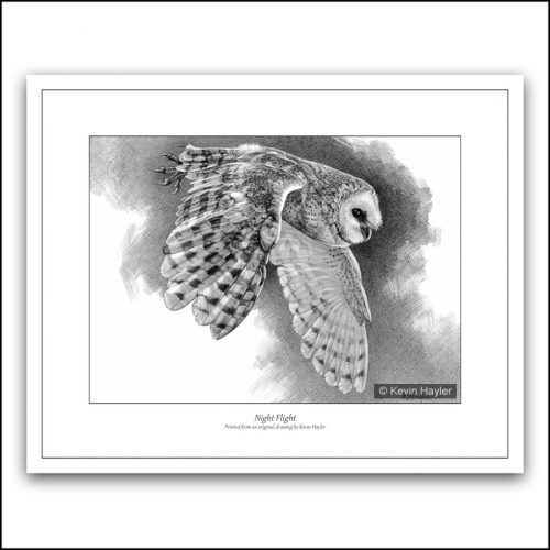 barn owl flying pencil drawing
