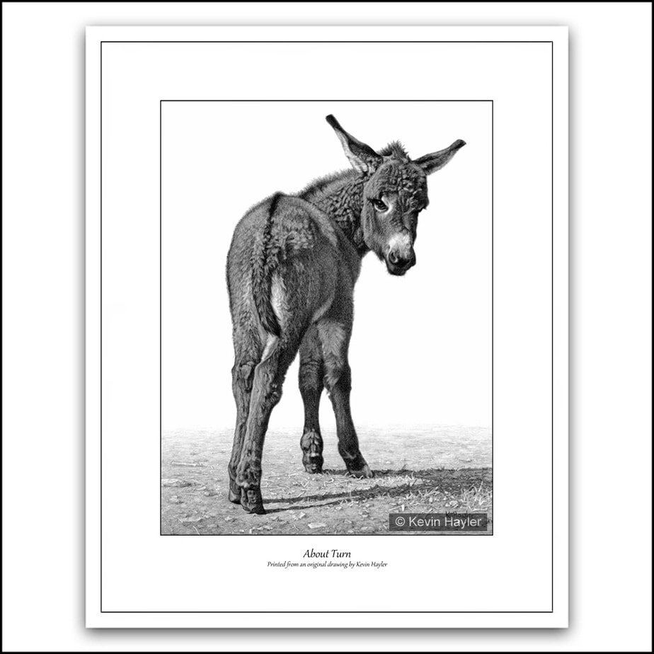 donkey foal turning fine pencil drawing