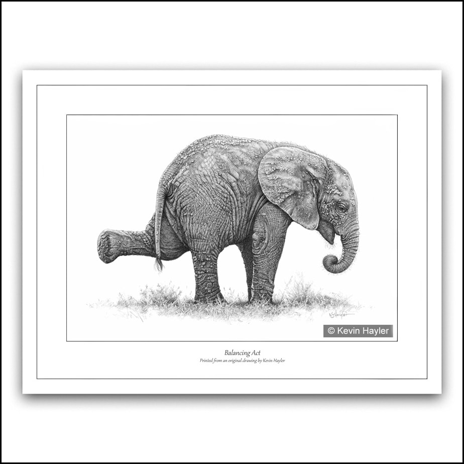Baby elephant playing pencil drawing