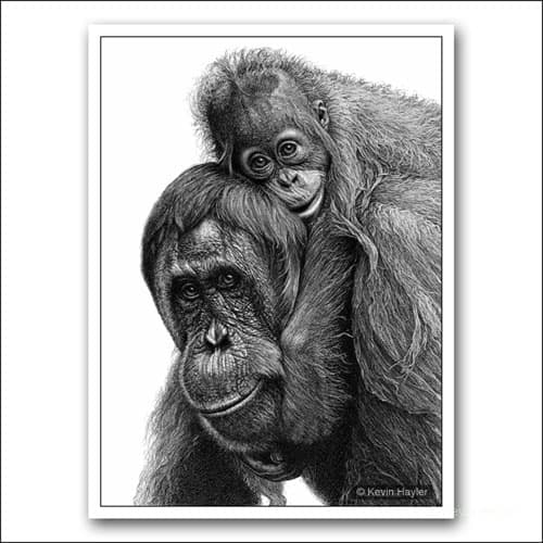 orangutan pencil and baby pencil drawing