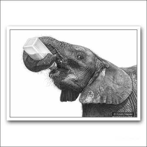 baby elephant with a bottle limited edition pencil drawing