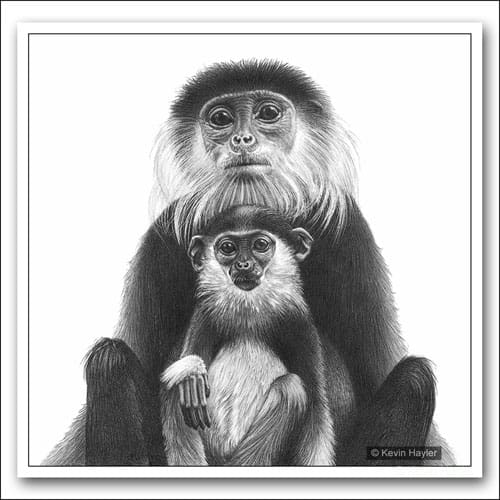 Mother and baby monkey douc langur pencil drawing