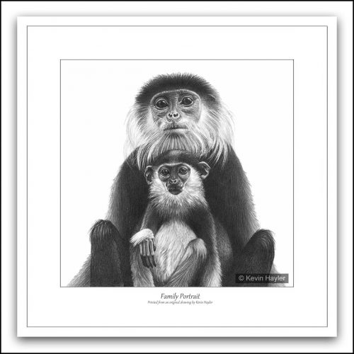 Mother and baby monkey posing for portrait fine pencil drawing