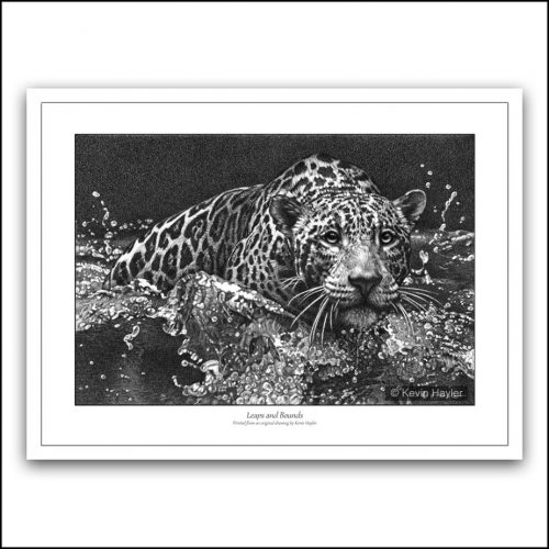 Jaguar leaping into water realistic pencil drawing