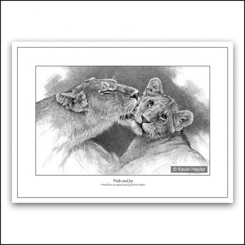 Lioness grooming her cub pencil drawing