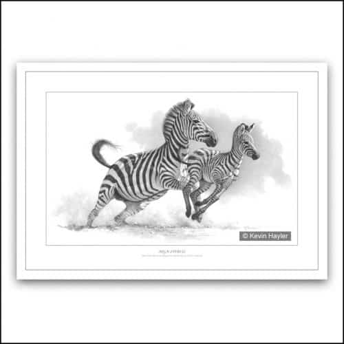 Mother zebra and foal running in profile pencil drawing