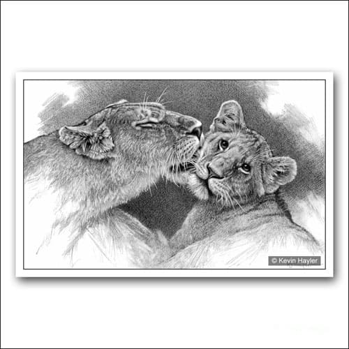 Lioness licking her cub limited edition pencil drawing