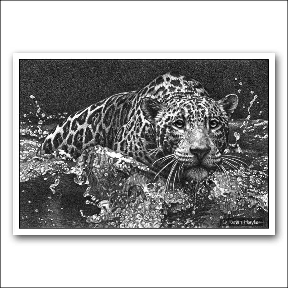 Jaguar leaping into water with intense eyes pencil drawing