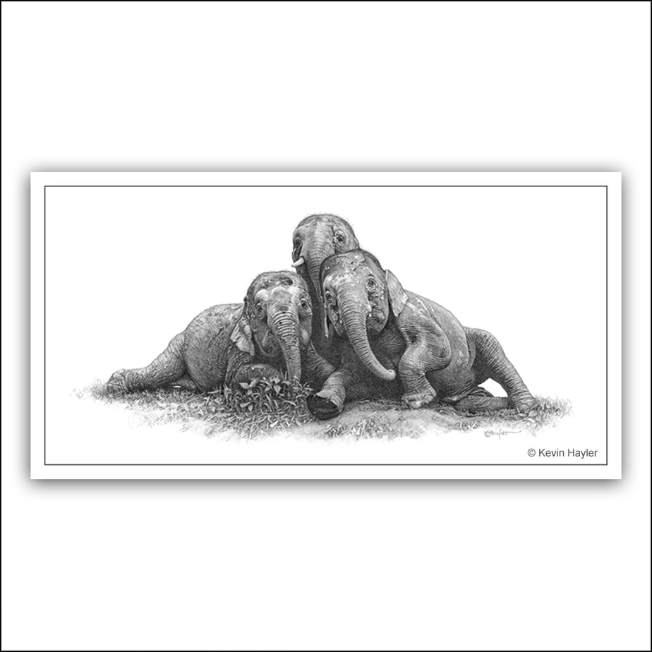 Three pygmy elephants playing pencil drawing