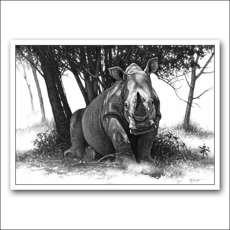 White rhino in dappled shade pencil drawing