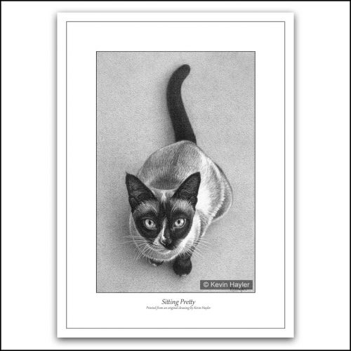 Siamese cat waiting for dinner pencil drawing