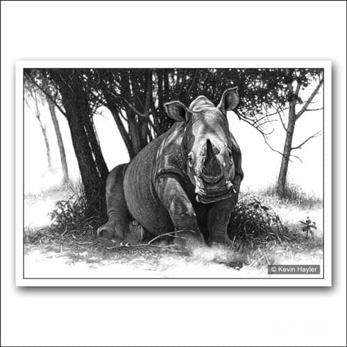 White rhino under a tree limited edition pencil drawing