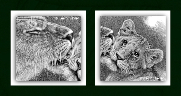 Lioness and cub Drawing details in close-up
