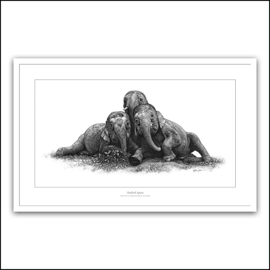 Three elephants playing in mud pencil drawing