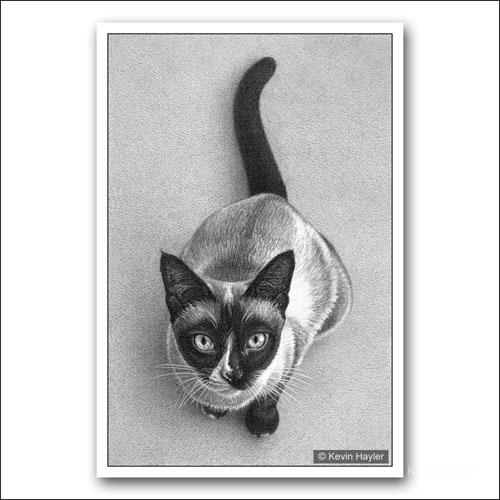 Siamese cat sitting pencil drawing