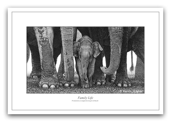 Pencil drawing of an elephant family
