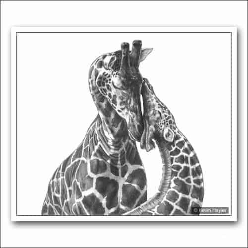 Mother and baby giraffe pencil drawing