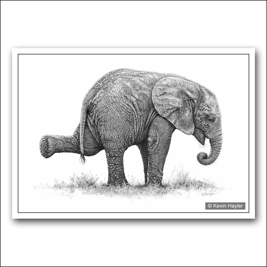 Balancing baby elephant pencil drawing