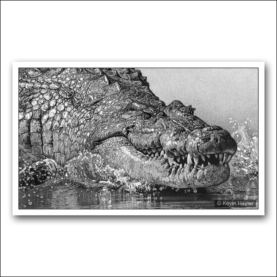 Very detailed pencil drawing of a Nile Crocodiles head