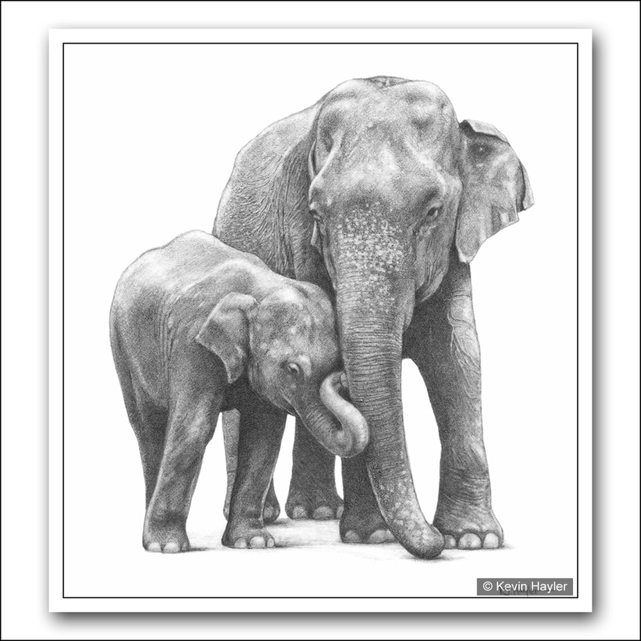 Mother and baby indian elephants pencil drawing