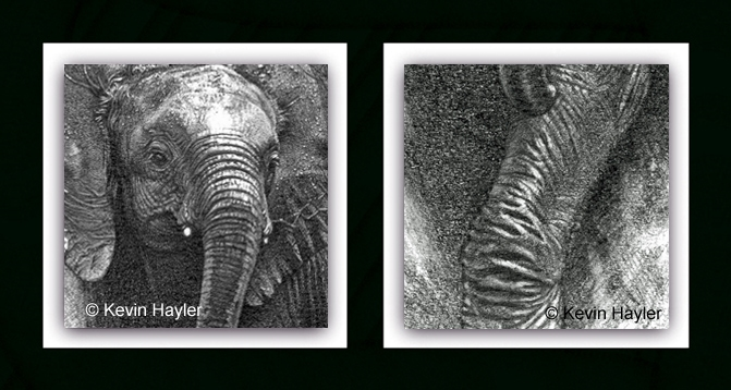 Detailed crops for baby elephant drawing