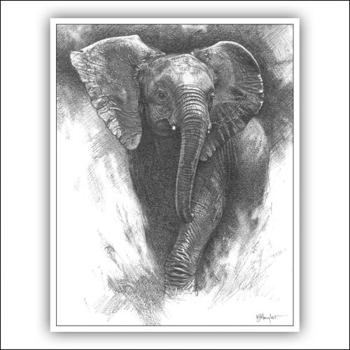 Pricing artwork example. Baby elephant running through the grass. A drawing by Kevin Hayler