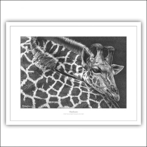 Giraffe at rest drawing signed limited edition
