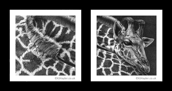 giraffe drawing details in close-up