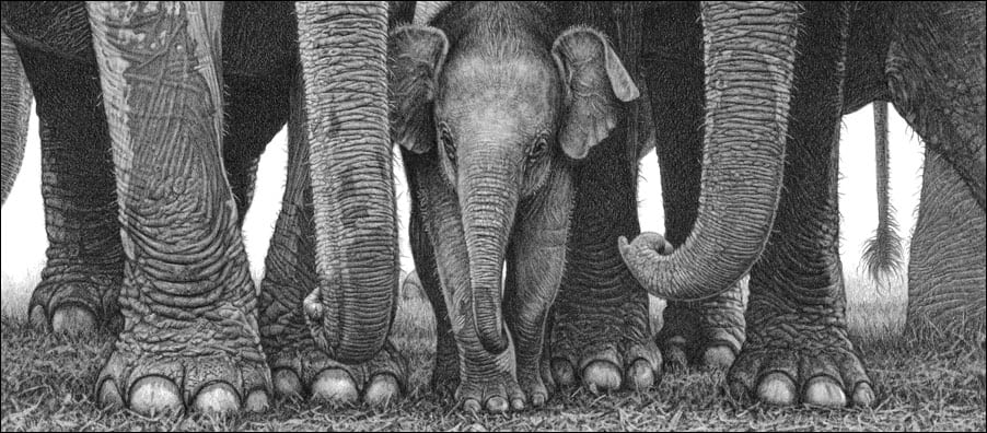 12 bestselling wildlife subjects Elephant family pencil drawing by Kevin Hayler