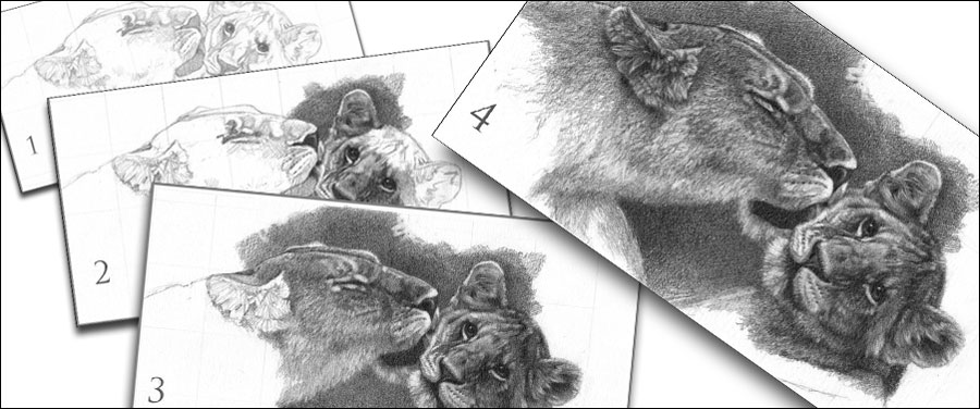 lioness and cub work in progress demo for how wildlife artists can make a living