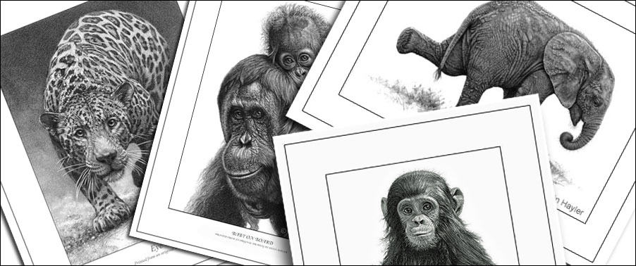 wildlife art prints example for how wildlife artists make a living