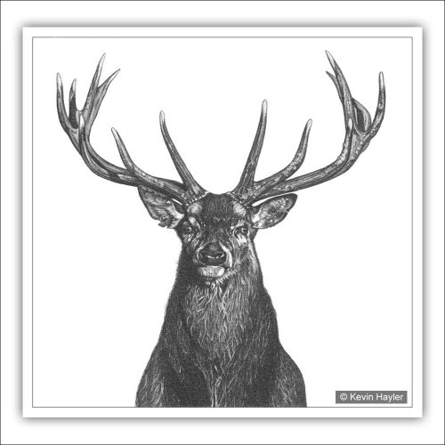 Stags head pencil drawing
