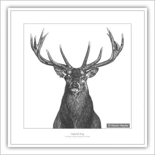 Red Deer Stag portrait pencil drawing