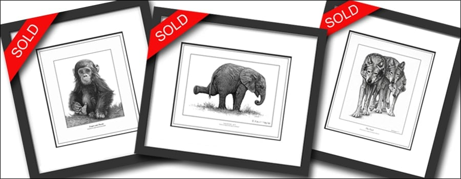 12 Wildlife subjects that sell three bestselling prints