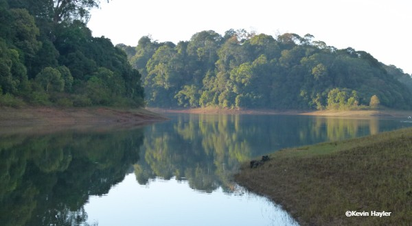 Early morning walk past Periyer lake in Periyer national Park, Kerala, India.  Reflections over the lake
