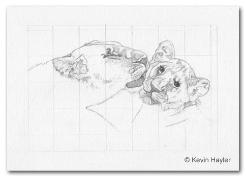 Line drawing of a lioness and her cub. How to draw with a grid
