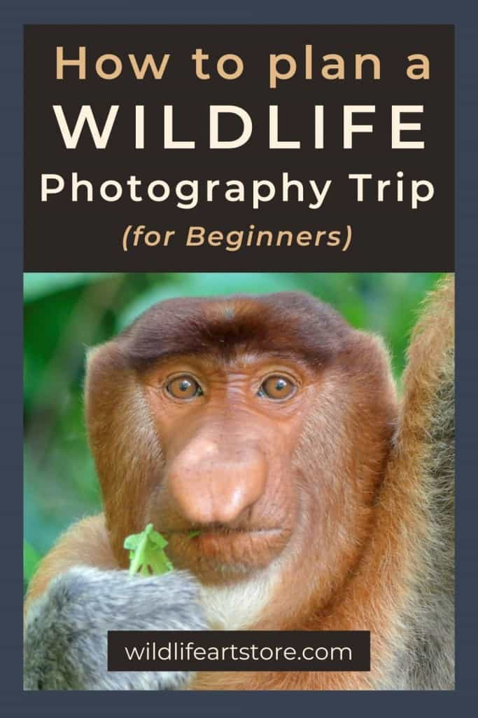How to plan a wildlife photography trip for beginners. A proboscis monkey portrait for Pinterest