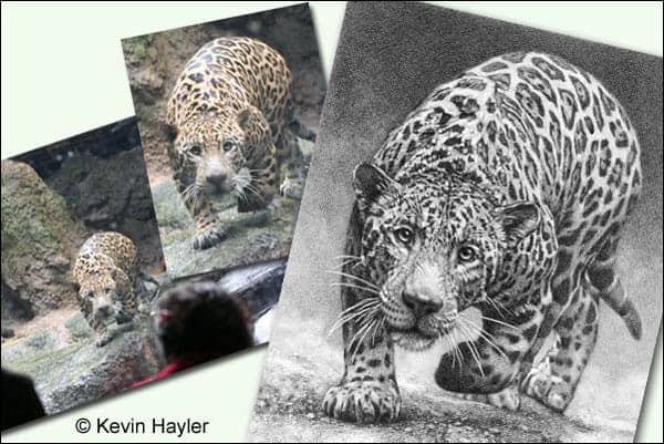 jaguar drawing in the planning process.