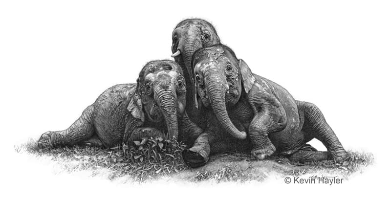 three pygmy elephants pencil drawing. A compact composition of 3 elephants.