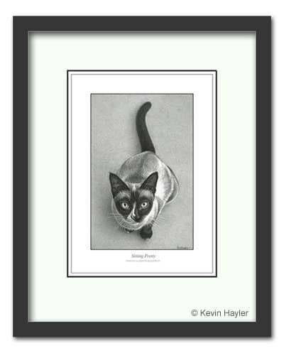 A Framed drawing of a Siamese cat by Kevin Hayler. Compose your art example