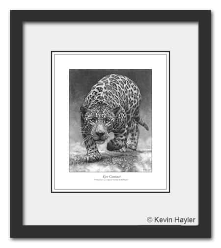 Sell more art Example of a Framed Jaguar Drawing by Kevin Hayler.