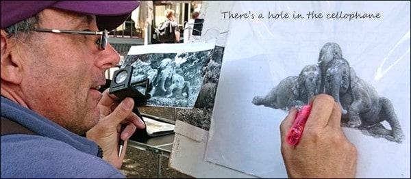 Kevin Hayler drawing elephants from a reference photo