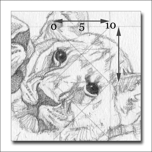Demonstrating how to draw using a grid. A detailed close-up of a lion cub.