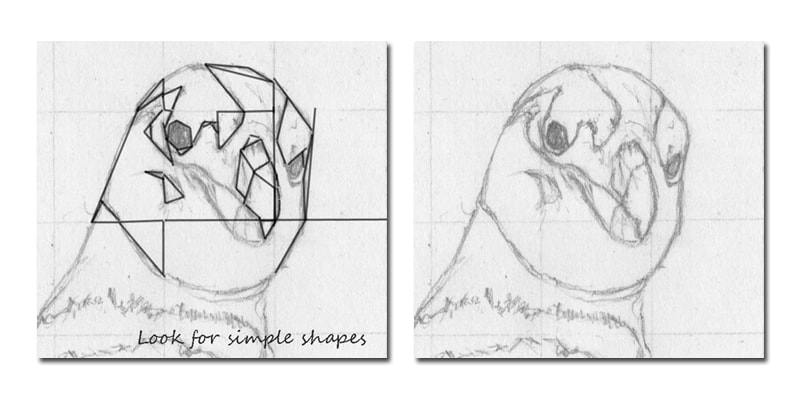 Example 3. Drawing basics using simple shapes to build form.