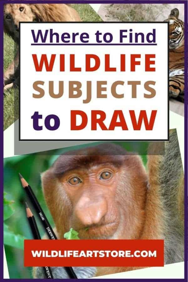 Where to find wildlife subjects to draw image for Pinterest. 3 photos. A wild tiger, lion, and monkey