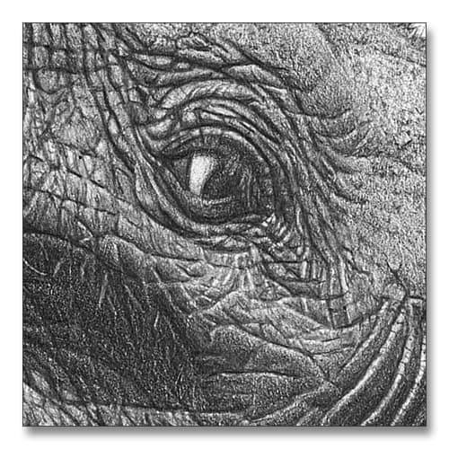 Adding depth to the detail of an elephants eye. A pencil study