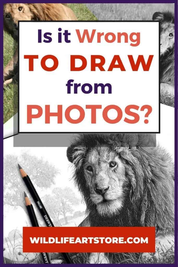 Is it wrong to draw from photos? image for Pinterest. Lion sketch and two lion reference photos