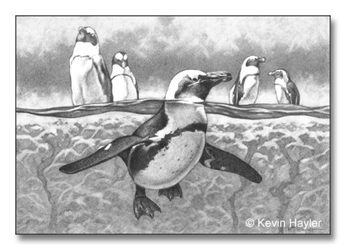 create depth by using scale, an example penguin paddling in water pencil sketch