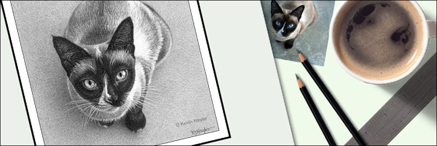 How to draw pet portraits from photographs feature image. A pencil drawing of a cat and cat photo.